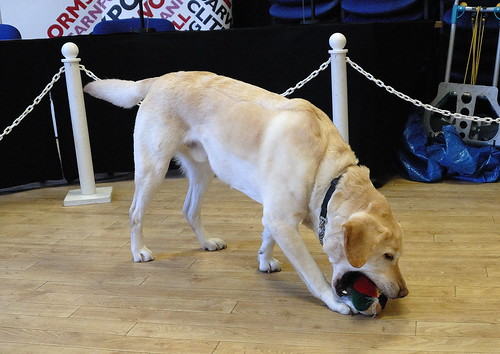 the guide dogs for the blind association jobs